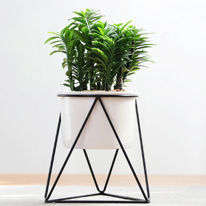 Black Garden Pot Holder For Office Desk Beautiful Plant Stand Mid Century Style - FOB:US$ - MOQ: