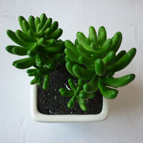 Mini Artificial Succulents Whosale Designs Eye Protection Artificial Plant - FOB:US$ - MOQ: