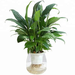 High-transparent Basin Hydroponic Green Plant Indoor Green Planting Flower Potted Office Desktop - FOB:US$ - MOQ: