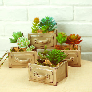 Succulent Plants Artificial Plants Succulents Art For Decoration - FOB:US$ - MOQ: