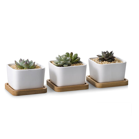 White Ceramic Succulent Plants Flower Pot With Bamboo Tray - Buy White Ceramic Indoor Plant Pots,Small White Flower Pot,Succulent Plants Pot Product on Alibaba.com