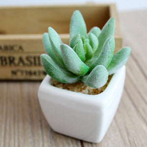 Artificial Succulent Plants Plastic Material Succulent For Pot Plant - FOB:US$ - MOQ: