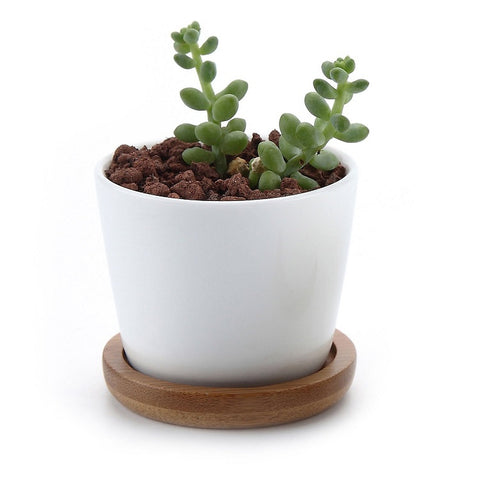Wholesale Ceramic White Round Simple Design Plant Flower Pot With Bamboo Tray Cactus Pot - FOB:US$ - MOQ: