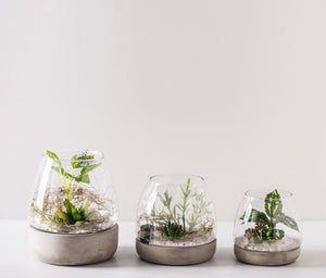 Terrarium Glass Vase/ Glass Pot With Concrete Base - FOB:US$ - MOQ: