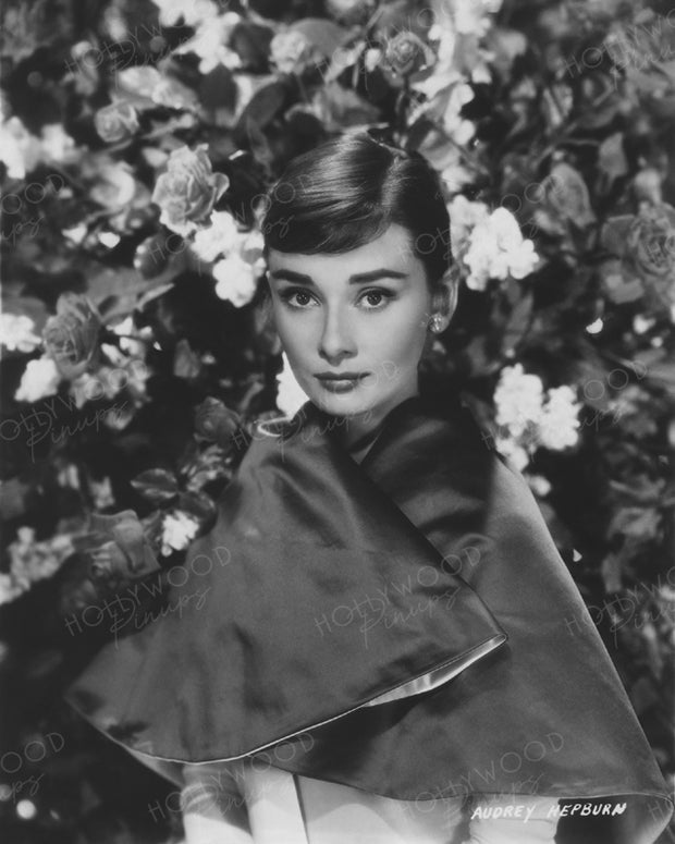 Audrey Hepburn Rose Beauty 1954 | Hollywood Pinups | Film Star Colour and B&W Prints
