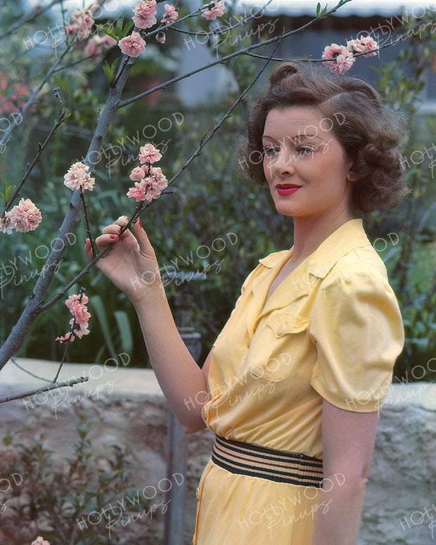 Myrna Loy Spring Blossom 1938 | Hollywood Pinups | Film Star Colour and B&W Prints