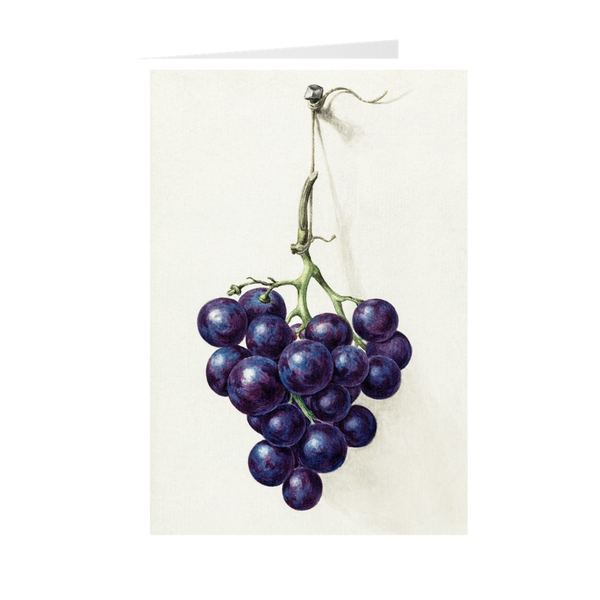 """Bunch of blue grapes"" Notecards"