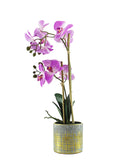 Orchid In Pot Plant 50CM - Pink