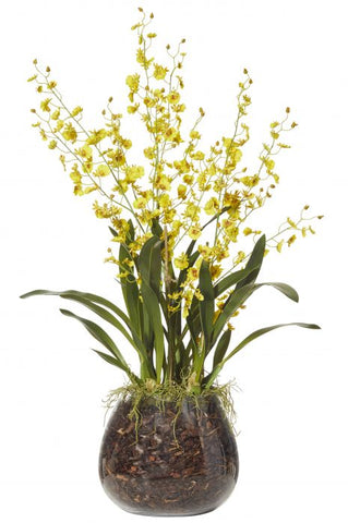 Yellow Dancing Orchids in Glass Vase