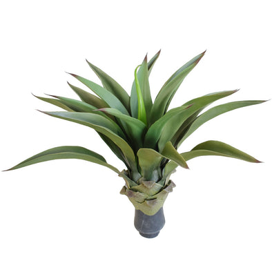 UV Agave 50cm No Pot