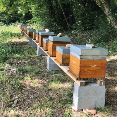 Rucher de Bourdeau Confidences d'Abeilles