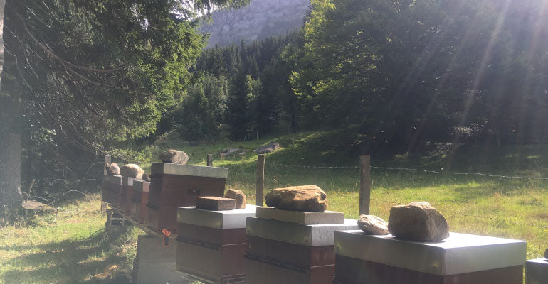 Aout_rucher_alpes_beekeeping