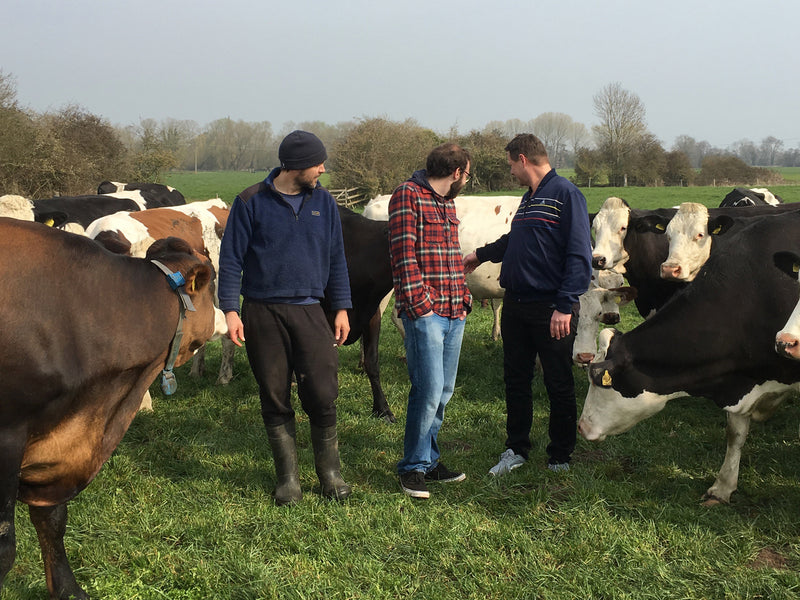 Up close and personal with the Montys at Fen Farm Dairy
