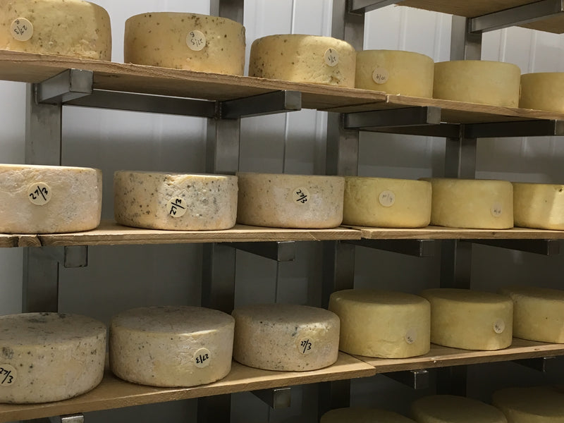 A visit to the new maturing rooms at Neal's Yard Dairy