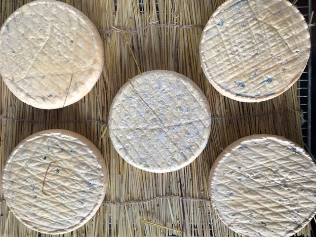 Aerial view of cheese maturing