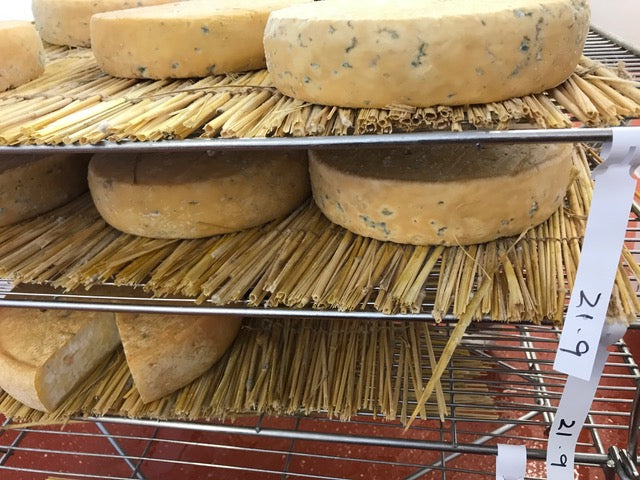 Cheese on a maturing rack
