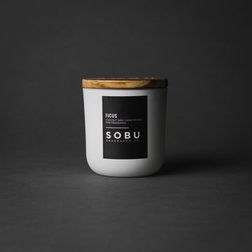 FICUS<br>-SINGLE WICK-