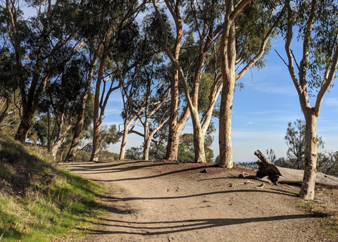 Will Rogers Hiking Trail in Pacific Palisades