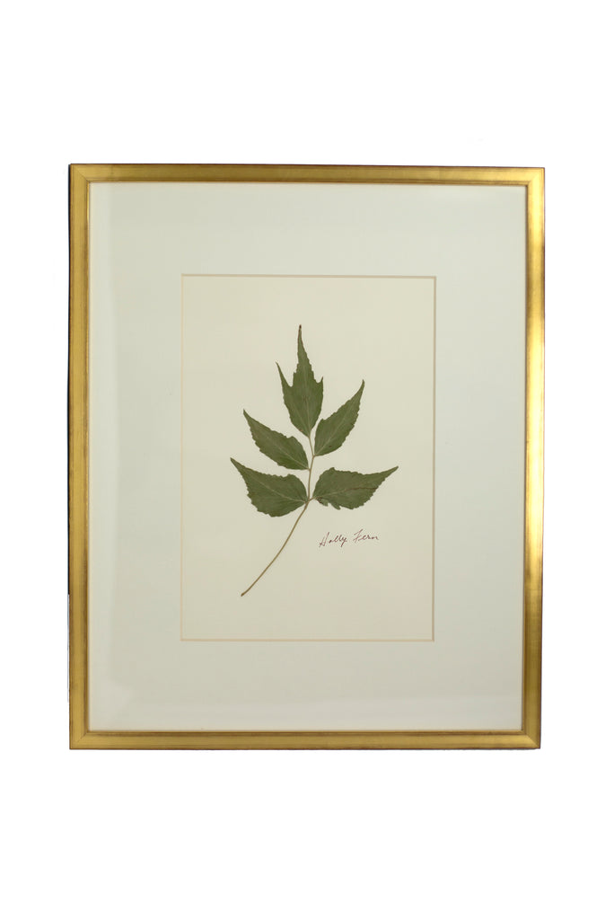 Framed Pressed Fern