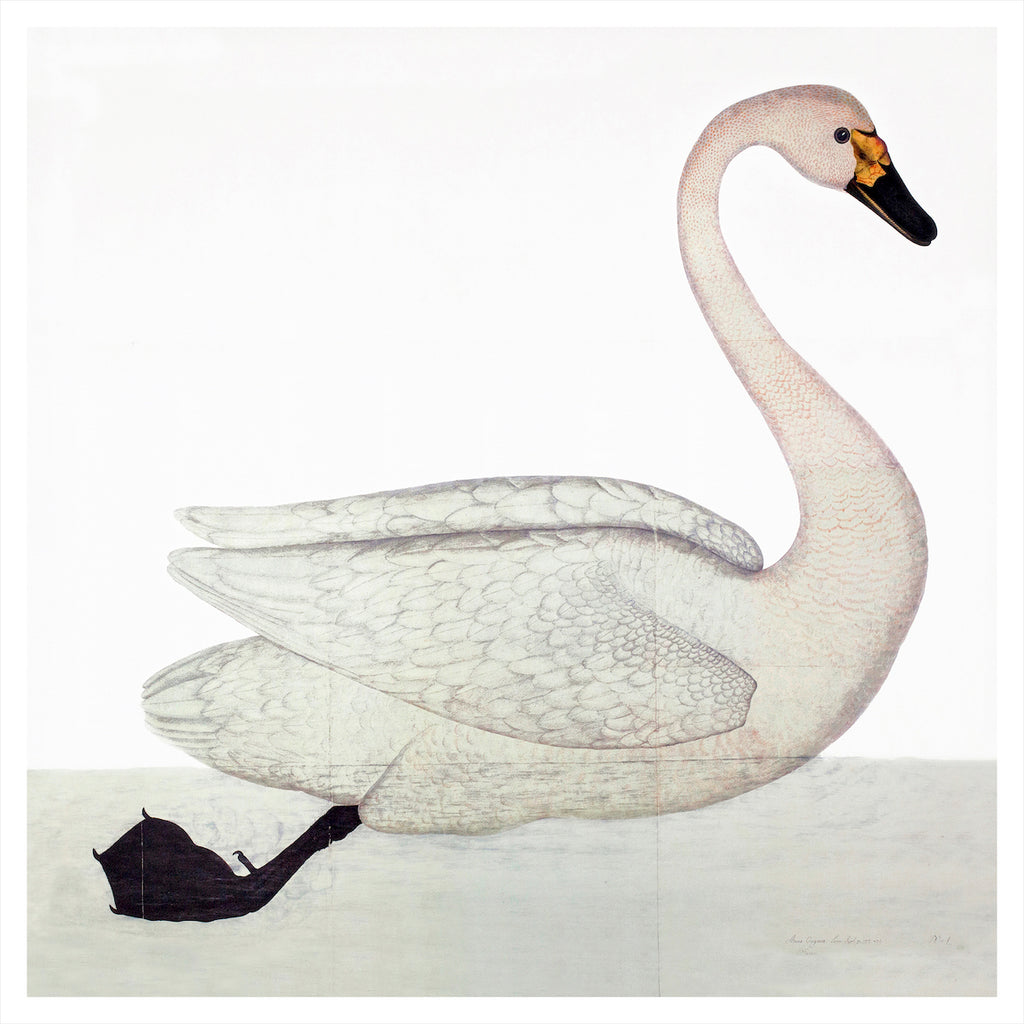 Remastered 17th C. Swedish Swan