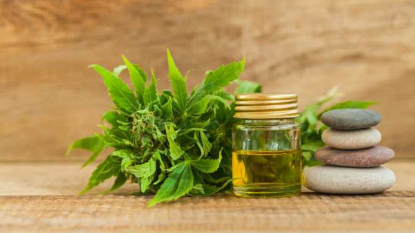 How Does CBD Support Weight Loss: All You Need to Know