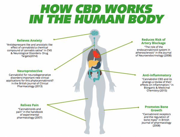 EFFECTS OF CBD ON HUMAN BEINGS