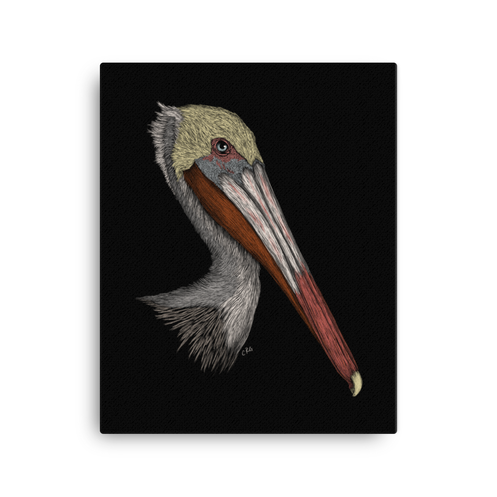 Pelican Art Prints