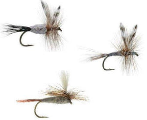 Feeder Creek Fly Fishing Flies - Adams Assortment - 24 Wet Flies - 4 Size Assortment 12,14,16,18 - Feeder Creek