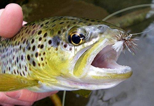 Ausable Wulff 1 Dozen Trout Dry Fly