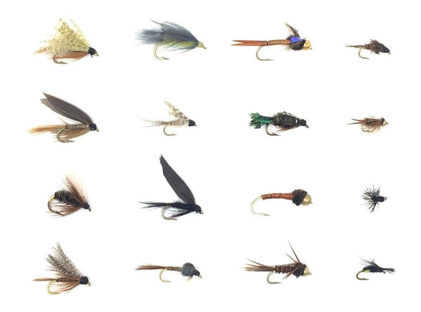 Feeder Creek Fly Fishing Flies Wet and Nymph Assortment for Trout Fishing and Other Freshwater Fish - 32/48 Flies - 16 Patterns of Wets, Nymph, Bead Head, Terrestrials, and More - Feeder Creek