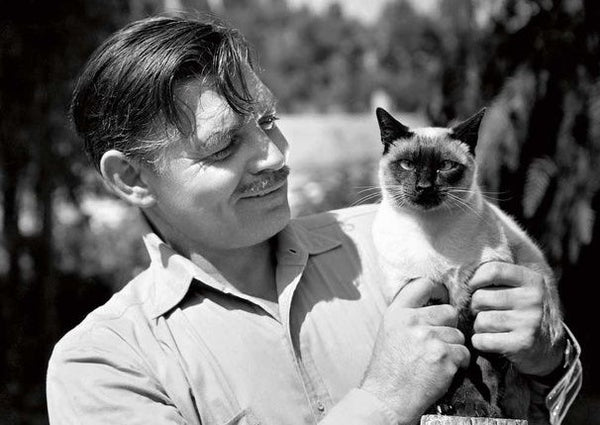 A Salute to the Glorious Leading Men from Hollywood Past --- with CATS