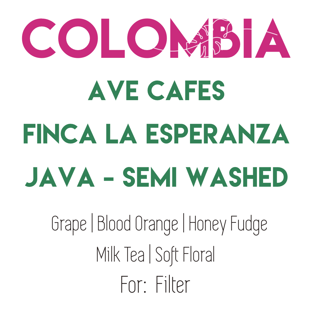 Colombia Ave Cafe -  Java - Semi Washed - Pre-order for August 11