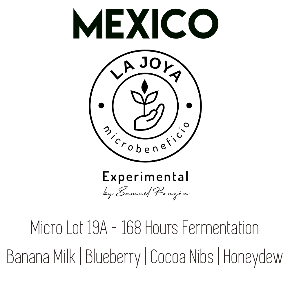 Mexico La Joya Lot 19A - Experimental Extended Fermentation Natural