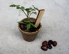Load image into Gallery viewer, Plot Australia Seed Raising Edition Tomato Seedling in Bio Pot