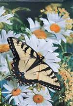 Butterfly and Daisy House Flag, #13784