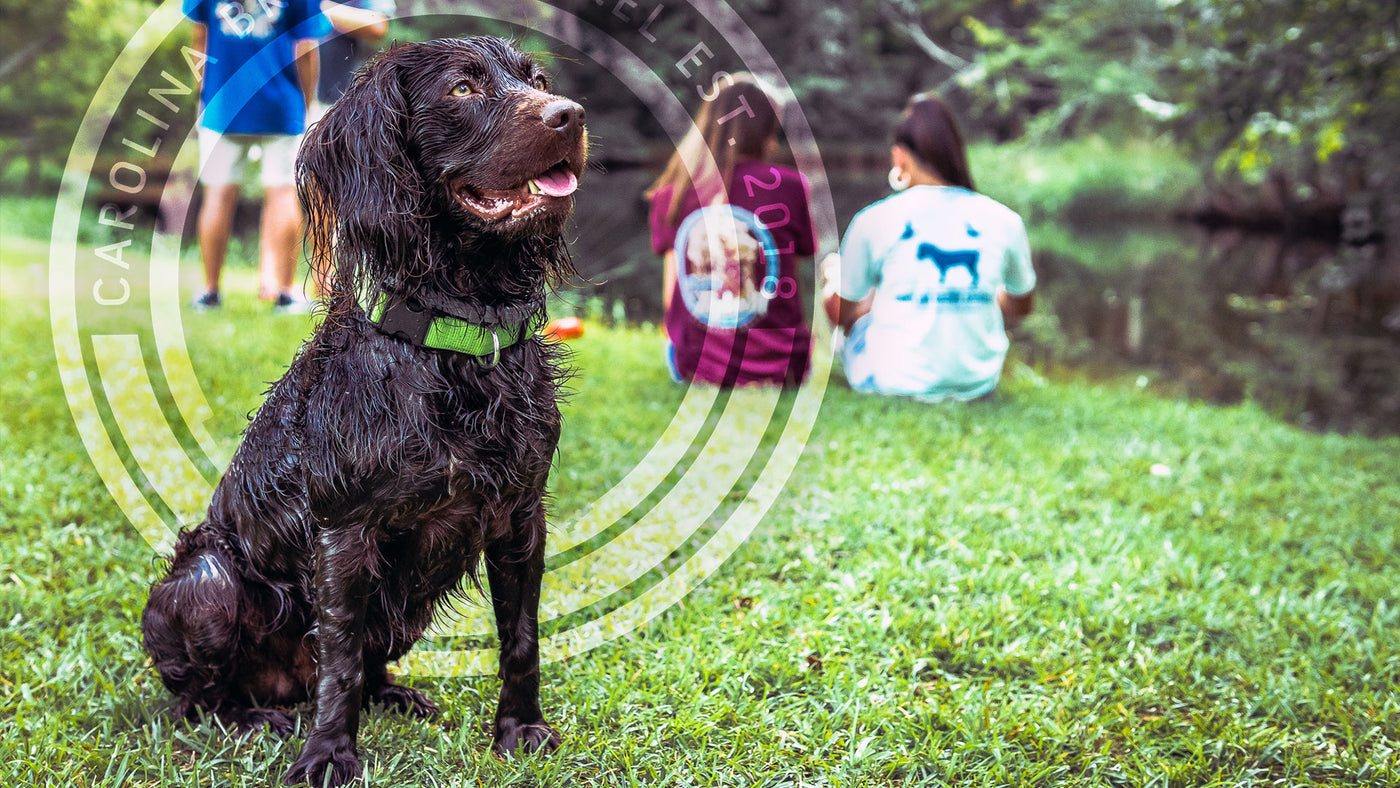Simply Southern Boykin Dog.  Dixie Dog Shirts.  Southern Women  Clothing.  Swamp Poodle Southern Wear. Palmetto Boykin Shirts. 2020 Southern Clothing Brands. Southern Clothing for Boykin Spaniel Puppy Lover. 2020 Southern Clothing Company