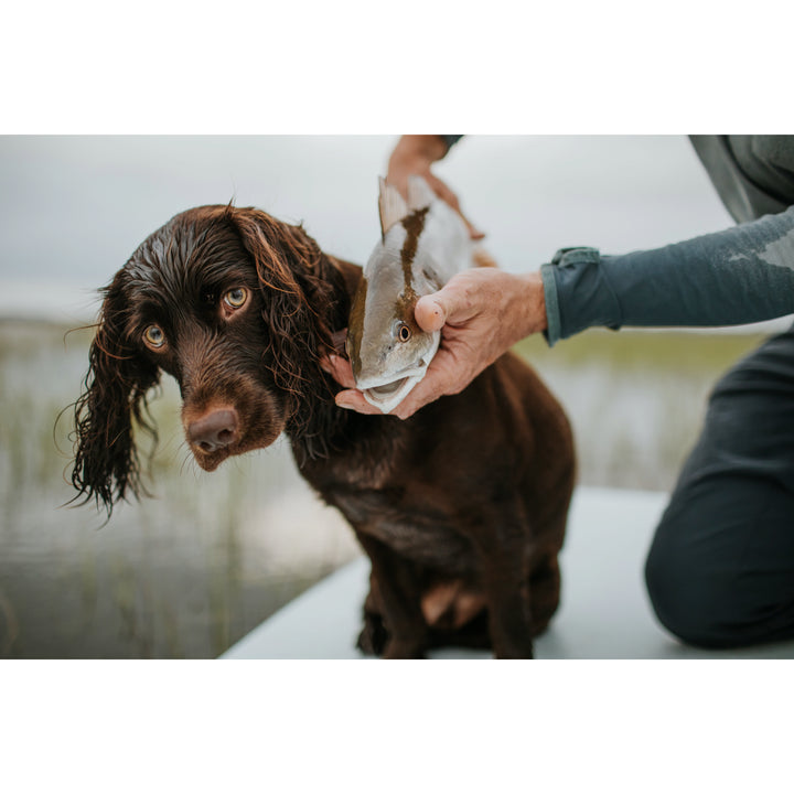 Simply Southern Boykin Dog.  Dixie Dog Shirts.  Southern Women  Clothing.  Swamp Poodle Southern Wear. Palmetto Boykin Shirts. 2020 Southern Clothing Brands. Southern Clothing for Boykin Spaniel Puppy Lovers.