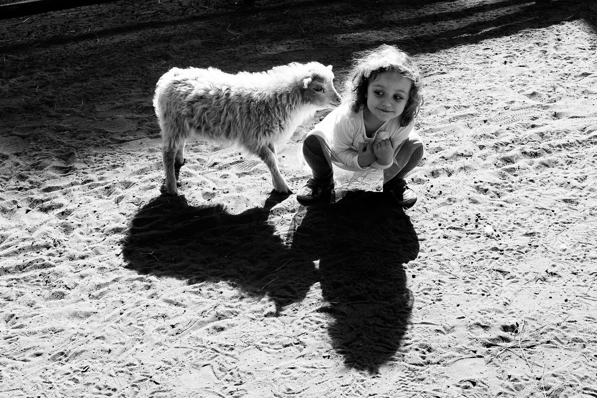 The Lamb and the little girl