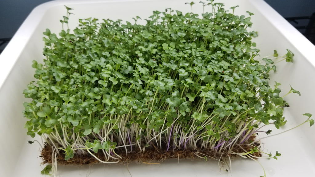 Superfood Mix Microgreens - Long Island Microgreens