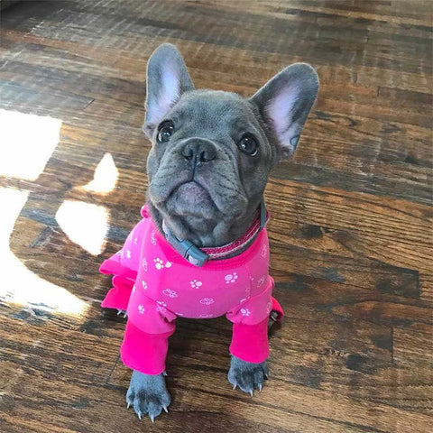 French Bulldog Pink Hearts Small Dog Puppy Cute onesie dog Pajamas with feet Pawsome Frenchies