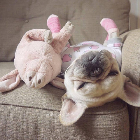 Image of Pink Pig Dog Toy - Snuggle Buddies