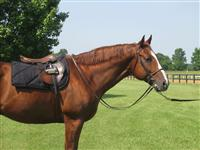 Load image into Gallery viewer, Fenwick Liquid Titanium Saddle Pad