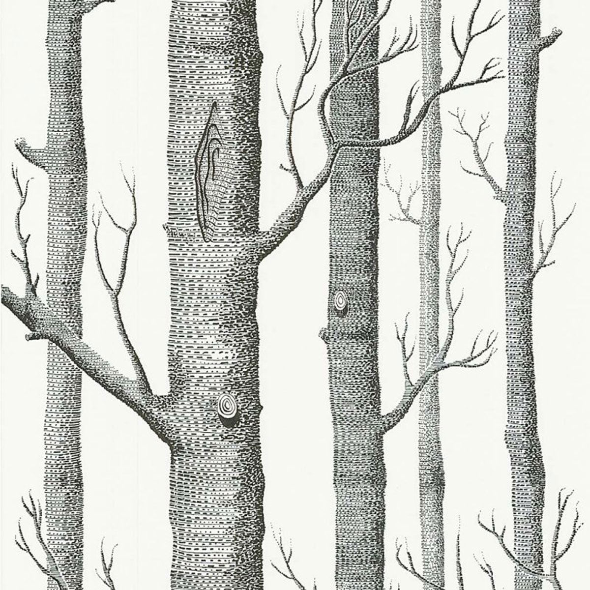 Cole & Son 'Woods Black on White' Wallpaper
