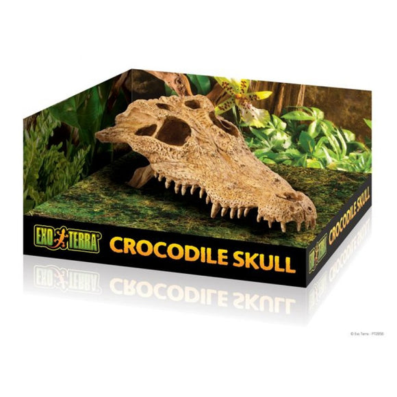 EXO TERRA CROCODILE SKULL- MEDIUM