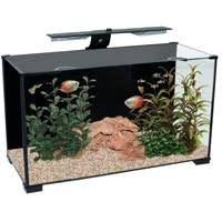 XPRESSION 32 AQUARIUM