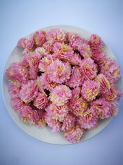 Carnation White Flower - Cream & Pink Loose Artificial Flowers