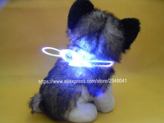 Night Safety Glow in Dark Collar