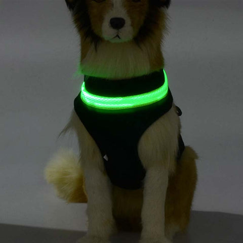 LED Dog Collar Harnesses