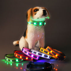 Anti-lost Flashing Glowing Collars