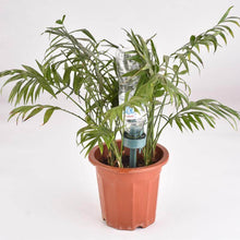 Self Watering Plant Device (BUY 6 FREE 6)